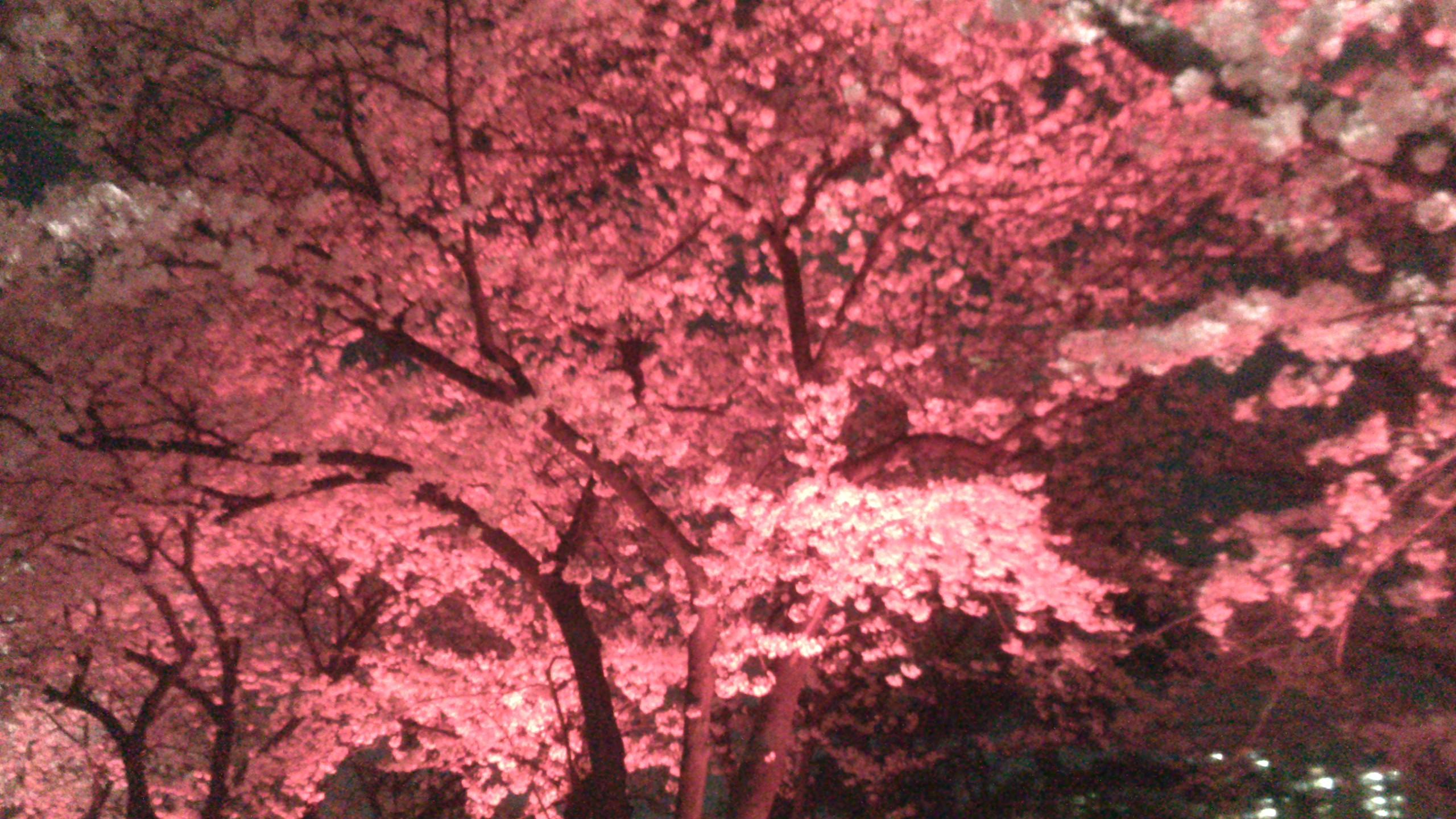 Un parc de g teaux des poissons pour pieds et des fleurs korean quest - Faire pousser un cerisier ...